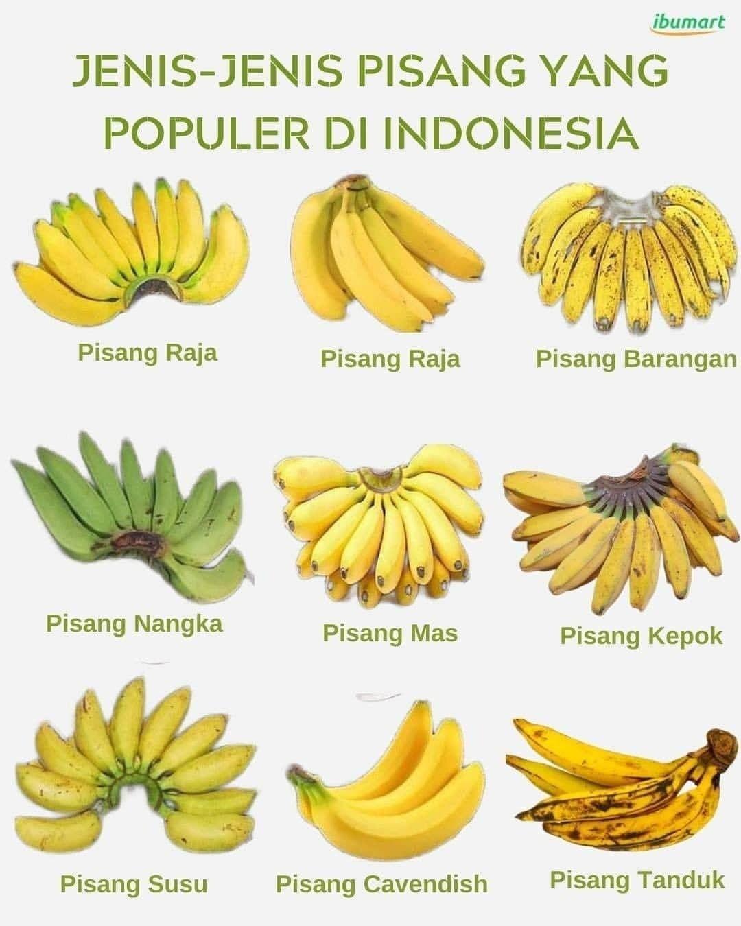 Info sehat, .  Jenis pisang apa yang paling kamu suka  Siapa ...